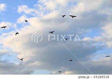 空を飛ぶカラス 24160516