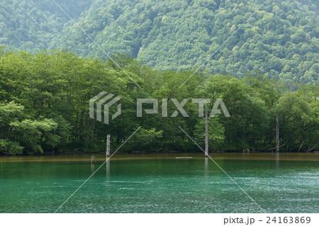 大正池の枯れ木、上高地、長野県 24163869