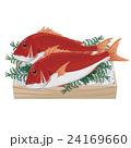 鯛 イラスト 24169660