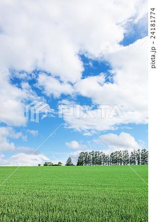 草原 24181774
