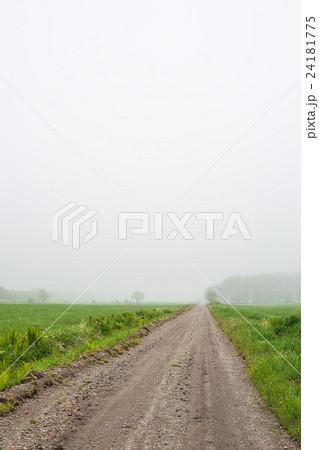 霧の道 24181775