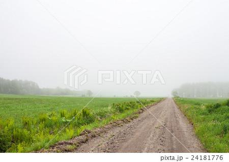 霧の道 24181776