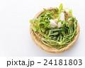 春の七草 七草 野菜の写真 24181803