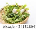 春の七草 七草 野菜の写真 24181804