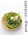 春の七草 七草 野菜の写真 24181805