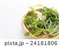 春の七草 七草 野菜の写真 24181806