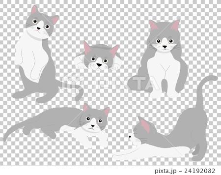 猫のしぐさ 24192082