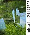忍野八海 ニジマス 水草の写真 24195798