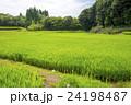 夏の田んぼ 24198487