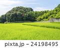 夏の田んぼ 24198495