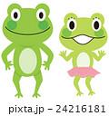 カエル カップル 24216181