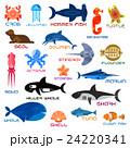 Oceanarium ocean animals and fishes with names 24220341