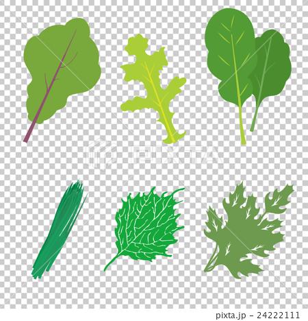 葉物野菜6種セット 24222111