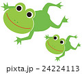 カエルの親子 24224113