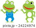 カエル 24224974