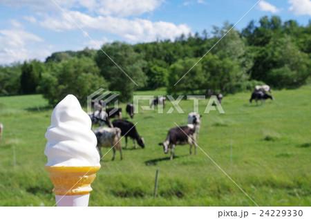 ソフトクリームと牛 24229330