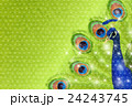 孔雀 鳥 素材のイラスト 24243745