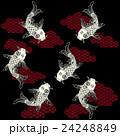 和調の鯉, 24248849