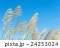 青空とススキ 24253024