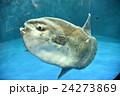 仙台うみの杜水族館 24273869