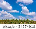 北海道 富良野 かんのファームの写真 24274918