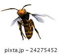 スズメバチ 24275452