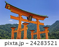 厳島神社の大鳥居 24283521