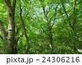 自然 晴れ 木の写真 24306216