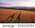 北海道 美瑛 畑の写真 24324584