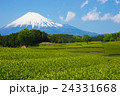 茶畑 風景 静岡の写真 24331668