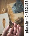 化石 24332158