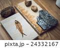 化石 24332167