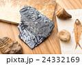 化石 24332169