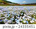 富士山 花 ネモフィラの写真 24335451