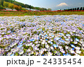 富士山 花 ネモフィラの写真 24335454
