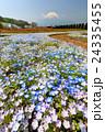富士山 花 ネモフィラの写真 24335455