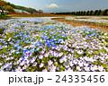 富士山 花 ネモフィラの写真 24335456
