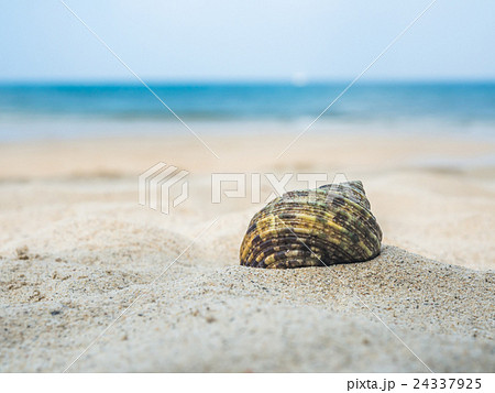 Sea shell on the beach 24337925