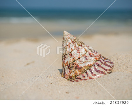 Sea shell on the beach 24337926