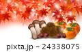 紅葉 秋 食べ物 背景  24338075
