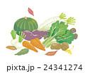 野菜 食材 緑黄色野菜のイラスト 24341274