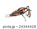 ゾウムシ ぞうむし 象虫の写真 24344428