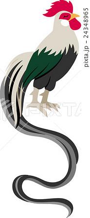 尾長鶏のイラスト素材 24348965 Pixta