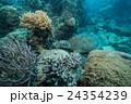 アオウミガメ カメ 居眠りの写真 24354239