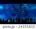 【沖縄県】美ら海水族館 24355815