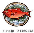 金目鯛 キンメダイ イラスト 24360138