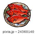 金目鯛 キンメダイ イラスト 24360140