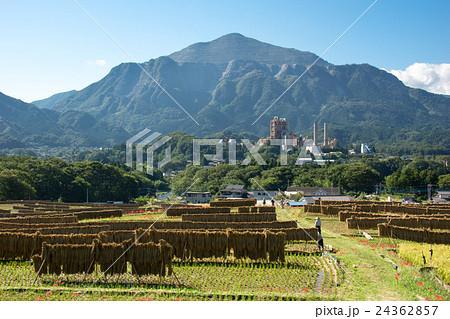 秋の武甲山と棚田 24362857