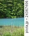 五色沼 裏磐梯 青沼の写真 24367406