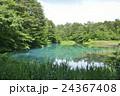 五色沼 裏磐梯 青沼の写真 24367408